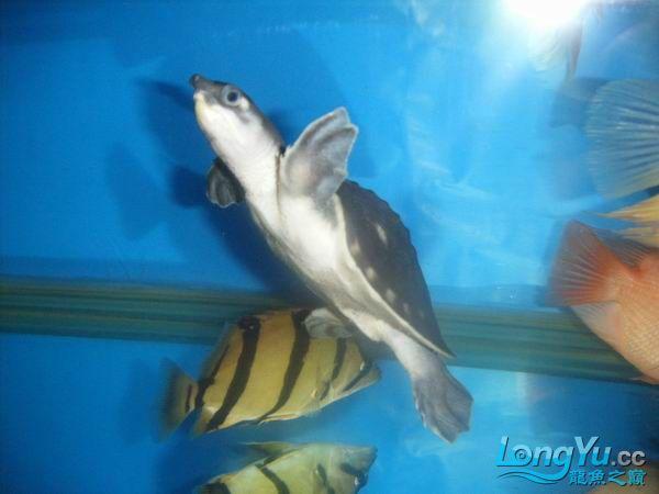 绵阳水族馆小青和猪猪 绵阳龙鱼论坛 绵阳水族批发市场第12张