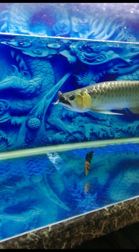 绵阳红龙鱼今天发表做个记录 绵阳水族批发市场