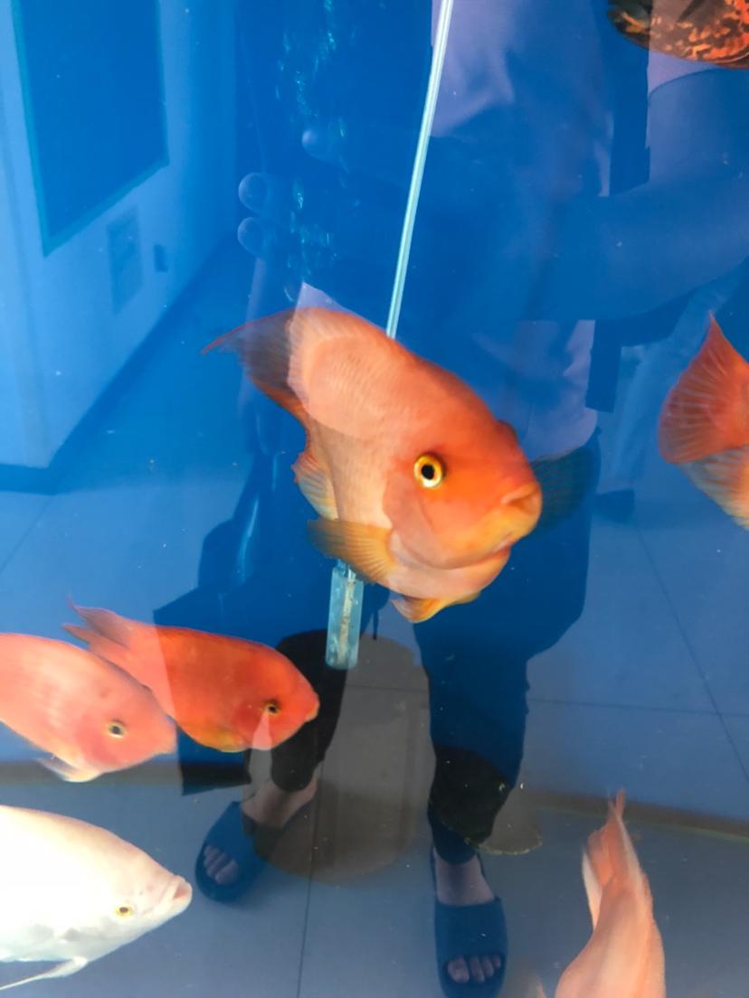 我鱼掉色了怎么回事掉色3个月了 绵阳龙鱼论坛 绵阳水族批发市场第2张