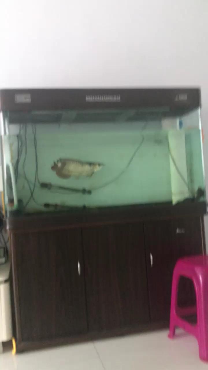 混养吉林鱼友圈绵阳红龙鱼 绵阳龙鱼论坛