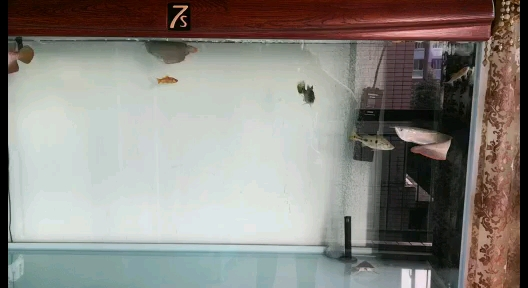 进一步入坑已更换156060鱼缸 绵阳龙鱼论坛