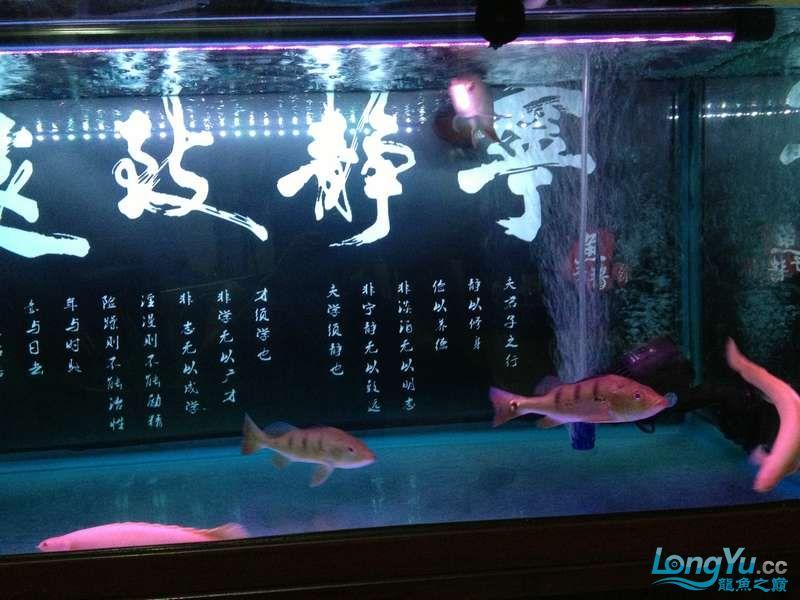 为小龙添加两个小伙伴 绵阳龙鱼论坛 绵阳水族批发市场第3张