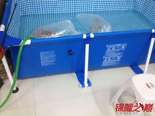 新买的鱼池绵阳鱼缸批发市场新买的鱼 绵阳水族批发市场 绵阳水族批发市场第1张