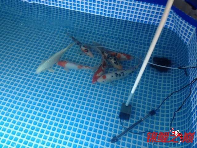 新买的鱼池绵阳鱼缸批发市场新买的鱼 绵阳水族批发市场 绵阳水族批发市场第9张