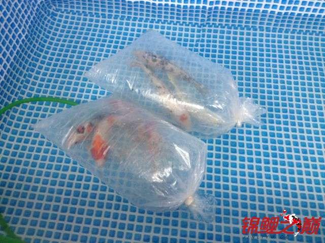 新买的鱼池绵阳鱼缸批发市场新买的鱼 绵阳水族批发市场 绵阳水族批发市场第8张