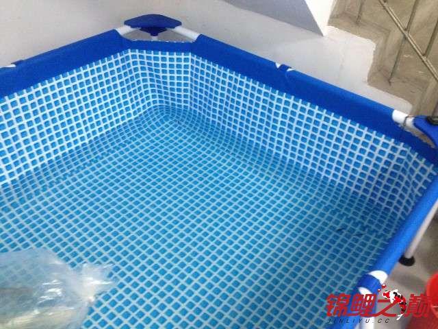 新买的鱼池绵阳鱼缸批发市场新买的鱼 绵阳水族批发市场 绵阳水族批发市场第7张