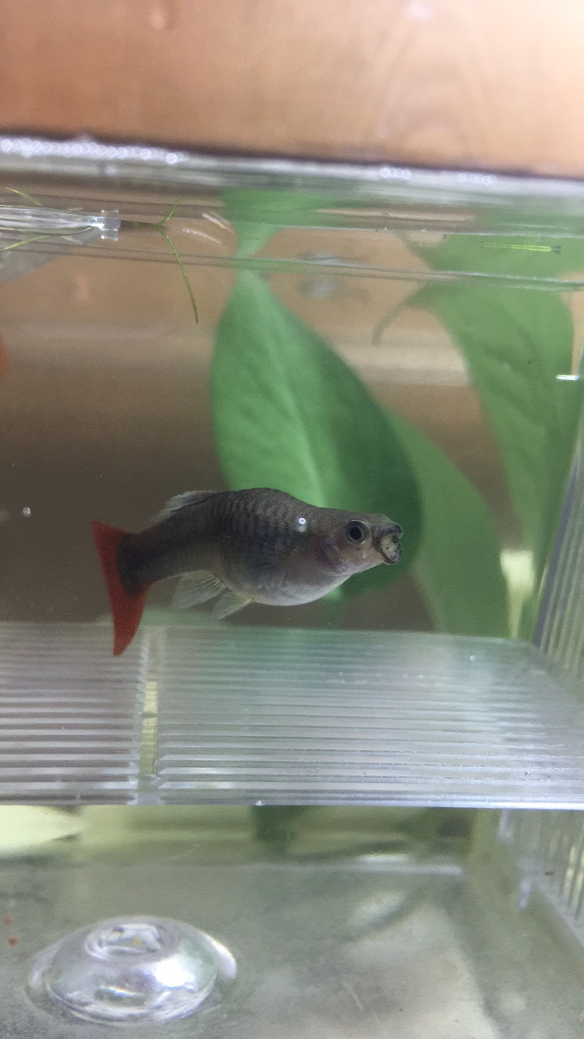 这个鱼啥时候开始生了