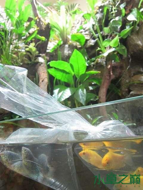 温馨小窝中的水路缸 绵阳水族批发市场 绵阳水族批发市场第10张