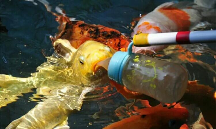 这些怪胎鱼我敢保证你重来没见过 绵阳水族批发市场 绵阳水族批发市场第6张
