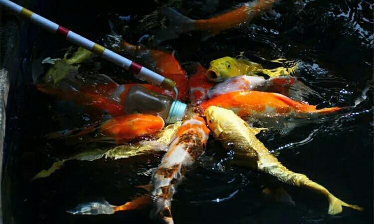 这些怪胎鱼我敢保证你重来没见过 绵阳水族批发市场 绵阳水族批发市场第7张