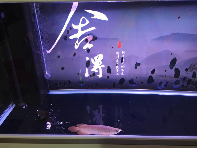 求助解答 龙鱼在缸底 绵阳龙鱼论坛 绵阳水族批发市场第2张