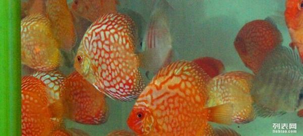 绵阳高新区组织开展个体户全程电子化登记培训 绵阳龙鱼论坛