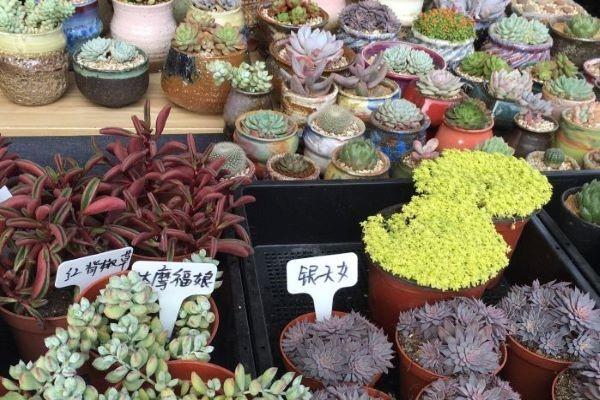 杭州城西花鸟工艺品市场怎么样? 绵阳龙鱼论坛 绵阳水族批发市场第2张