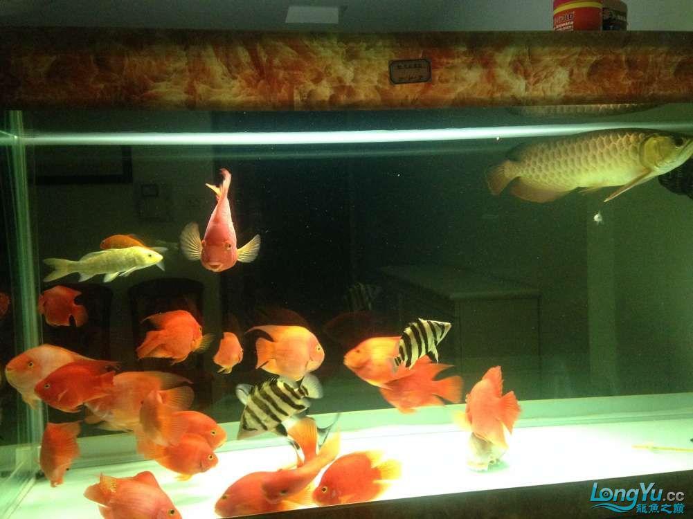 看看我的混养嘿嘿虽然也都是低端的鱼 绵阳水族批发市场 绵阳水族批发市场第2张