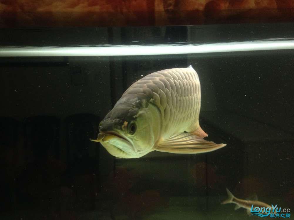 看看我的混养嘿嘿虽然也都是低端的鱼 绵阳水族批发市场 绵阳水族批发市场第4张