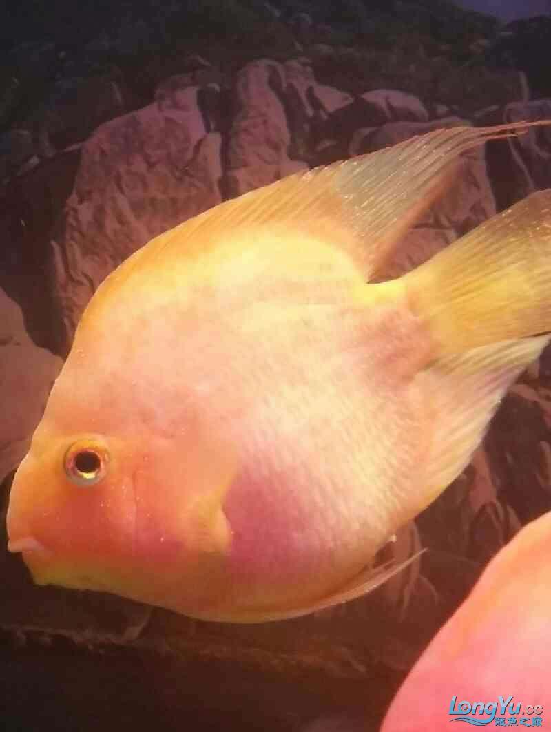 各位鱼友能否帮我看看这个是打粉病还是白点?已经一周了我加绵阳花鸟市场陆龟