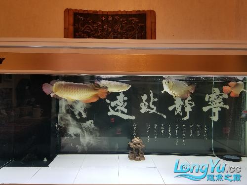 五龙更新 绵阳龙鱼论坛 绵阳水族批发市场第1张