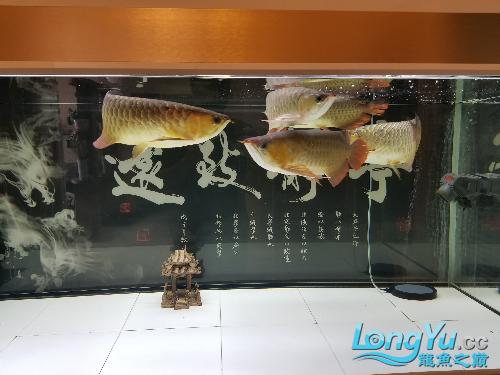 五龙更新 绵阳龙鱼论坛 绵阳水族批发市场第2张