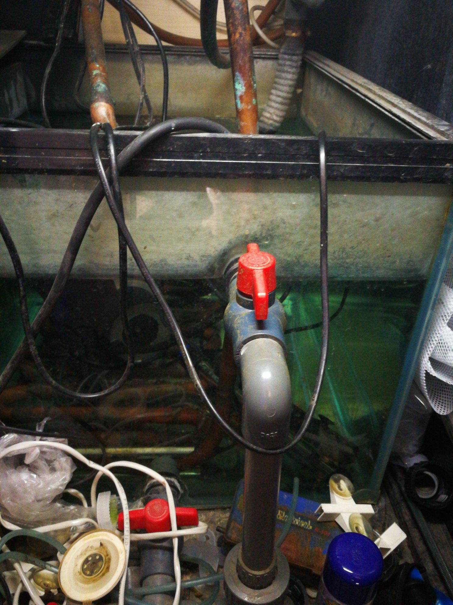 自动换水超级靠谱省心省力还水质稳定 绵阳水族批发市场 绵阳水族批发市场第3张