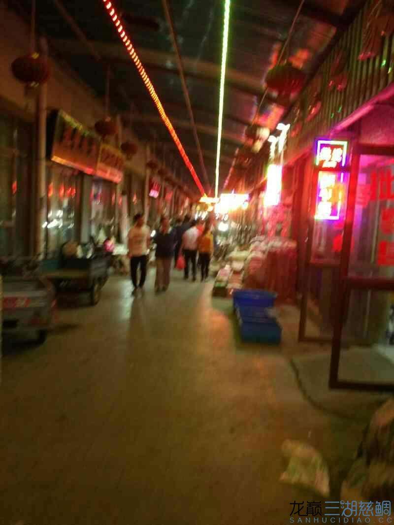 小蜜蜂天津中环花鸟鱼虫市场 绵阳龙鱼论坛 绵阳水族批发市场第6张