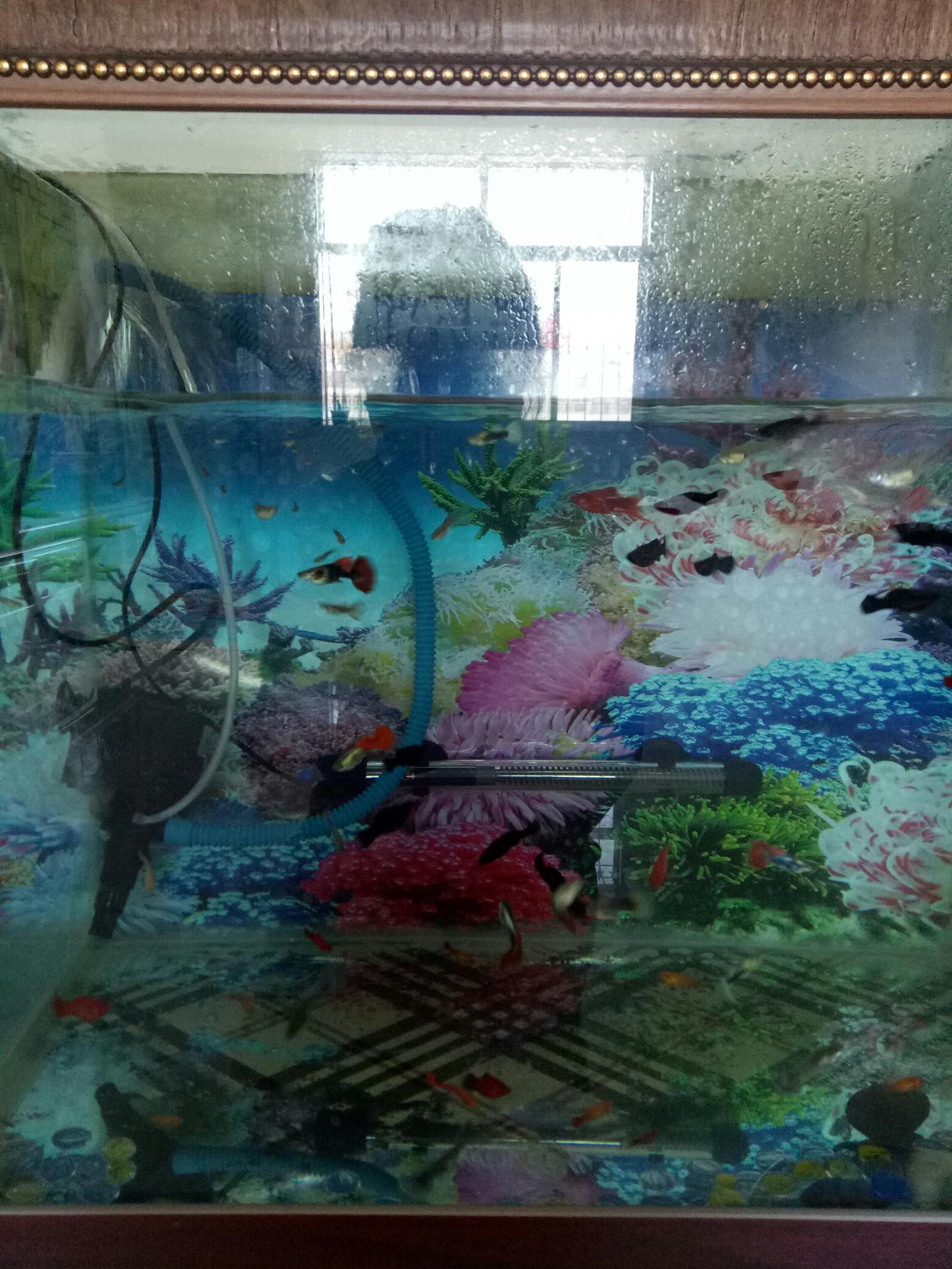 我的孔雀鱼老是被水泵吸死是什么原因