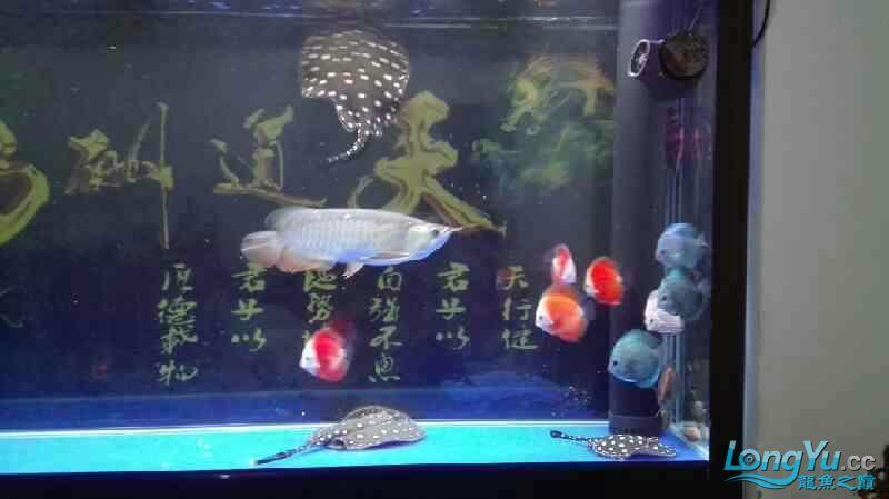 要出差一个星期鱼儿鱼儿自己照顾自己吧绵阳热带鱼批发市场