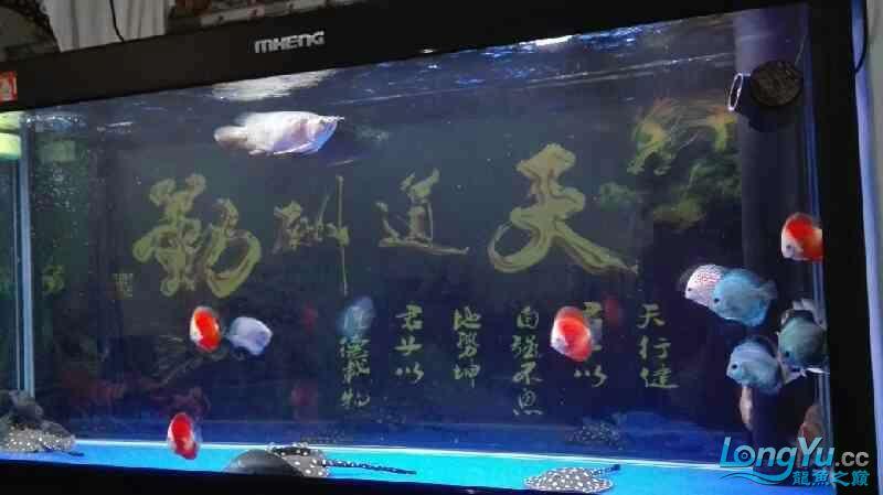 要出差一个星期鱼儿鱼儿自己照顾自己吧绵阳热带鱼批发市场 绵阳龙鱼论坛 绵阳水族批发市场第5张