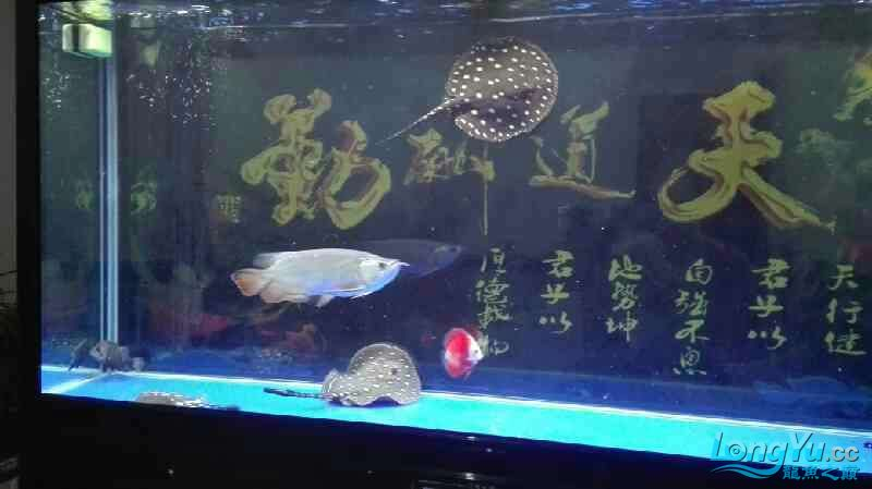 要出差一个星期鱼儿鱼儿自己照顾自己吧绵阳热带鱼批发市场 绵阳龙鱼论坛 绵阳水族批发市场第7张