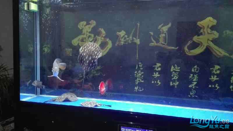 要出差一个星期鱼儿鱼儿自己照顾自己吧绵阳热带鱼批发市场 绵阳龙鱼论坛 绵阳水族批发市场第9张
