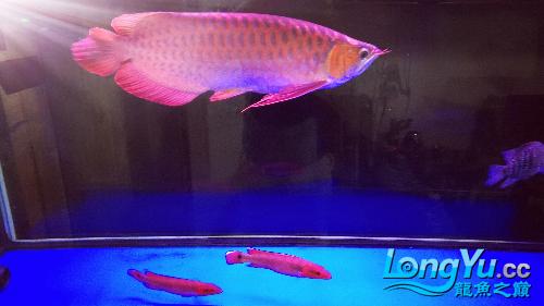 绵阳海洋公园位置我的新成员-- 绵阳龙鱼论坛 绵阳水族批发市场第2张