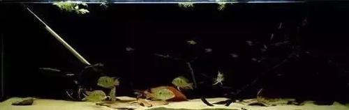 南美水族风格鱼缸7种绝配鱼 绵阳水族批发市场 绵阳水族批发市场第3张