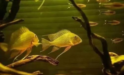 南美水族风格鱼缸7种绝配鱼 绵阳水族批发市场 绵阳水族批发市场第7张