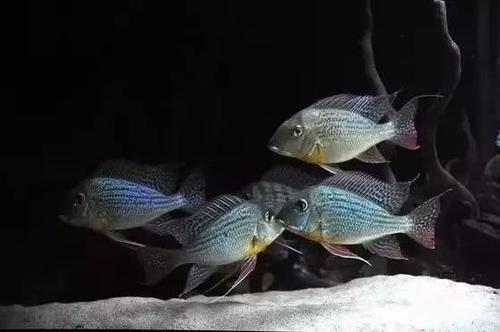 南美水族风格鱼缸7种绝配鱼 绵阳水族批发市场 绵阳水族批发市场第2张