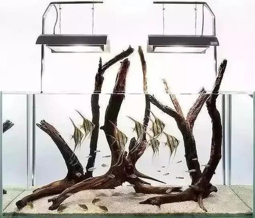 南美水族风格鱼缸7种绝配鱼 绵阳水族批发市场 绵阳水族批发市场第19张