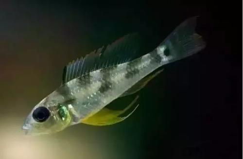 南美水族风格鱼缸7种绝配鱼 绵阳水族批发市场 绵阳水族批发市场第27张