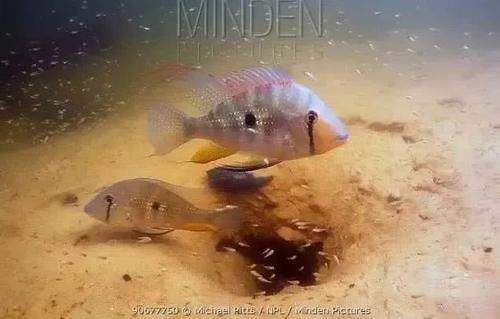 南美水族风格鱼缸7种绝配鱼 绵阳水族批发市场 绵阳水族批发市场第37张
