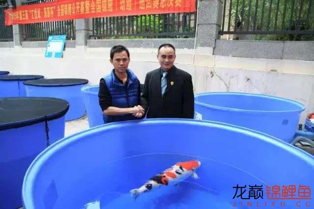 海豚杯全国锦鲤赛冠亚季