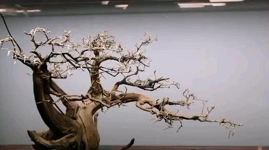 继续来一个树