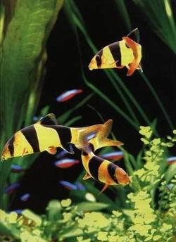 怎样养鱼鱼缸水不浑浊 绵阳龙鱼论坛