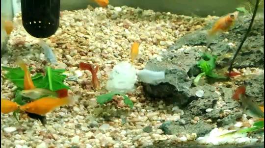 绵阳斑马鸭嘴虾吃个饭真难