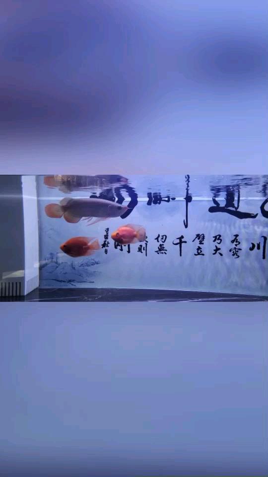 绵阳哪个水族店有豹纹夫建档 绵阳龙鱼论坛 绵阳水族批发市场第1张