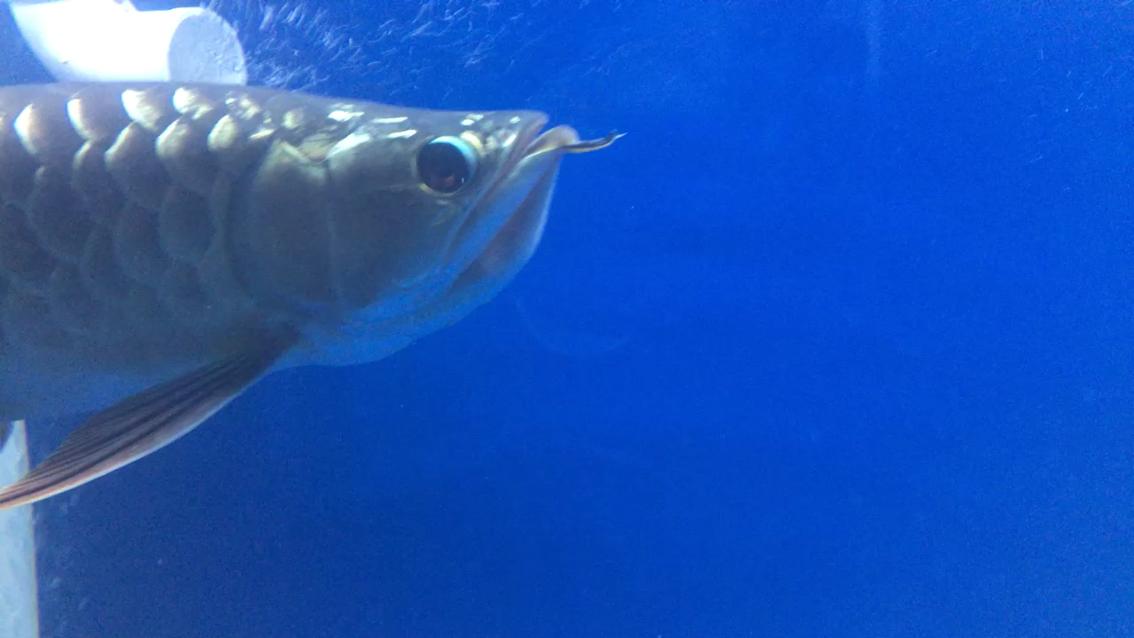 绵阳海水鱼造反了 绵阳水族批发市场 绵阳水族批发市场第1张