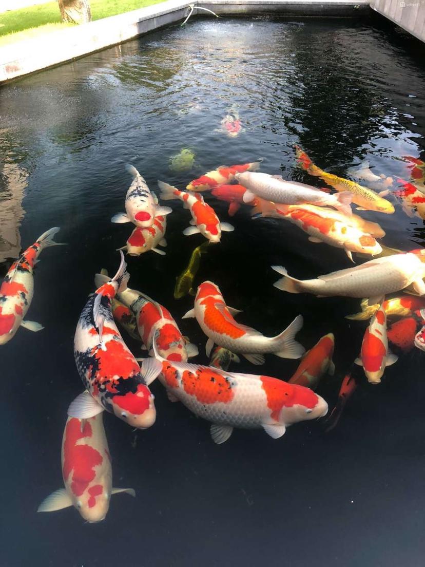 绵阳银龙从现在开始养鱼八字政策告别死鱼 绵阳水族批发市场 绵阳水族批发市场第4张