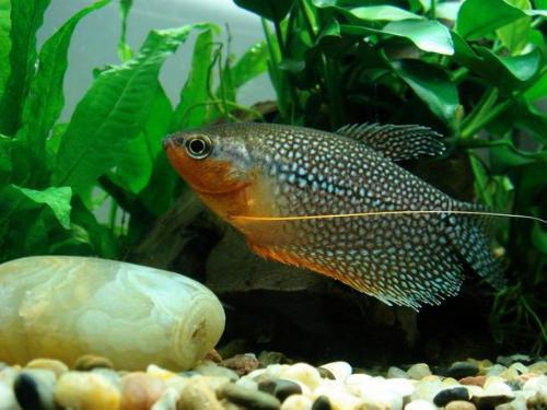 绵阳水族箱鱼缸灯管新手想养鱼山峰鱼缸设备