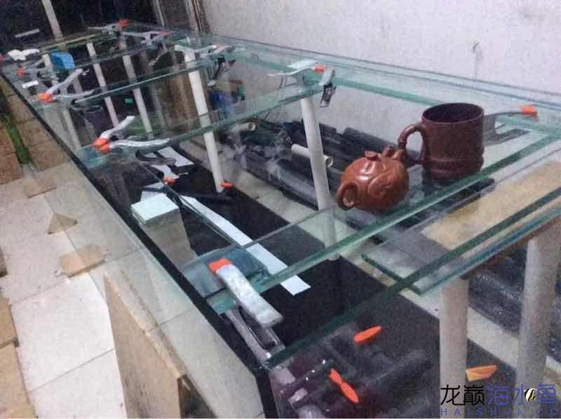 绵阳热带鱼缸里怎么养水草3210880880 绵阳水族批发市场 绵阳水族批发市场第4张