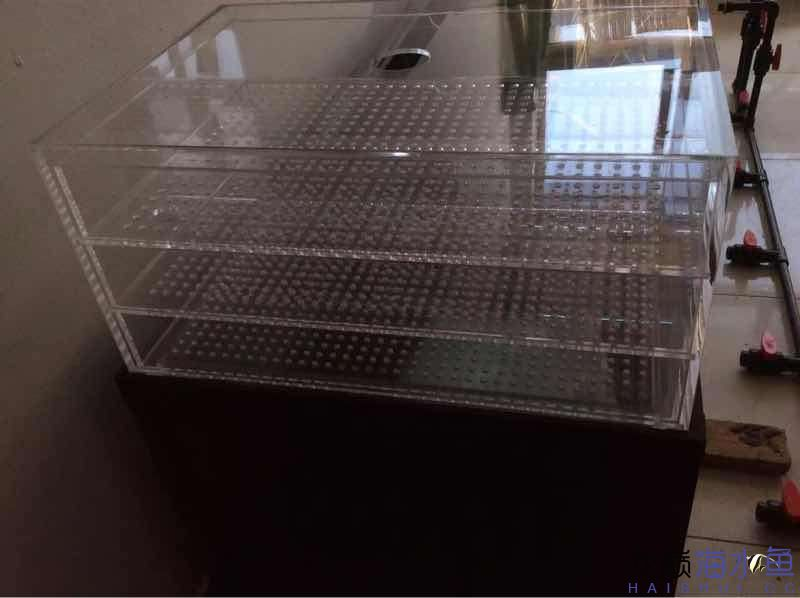 绵阳热带鱼缸里怎么养水草3210880880 绵阳水族批发市场 绵阳水族批发市场第6张