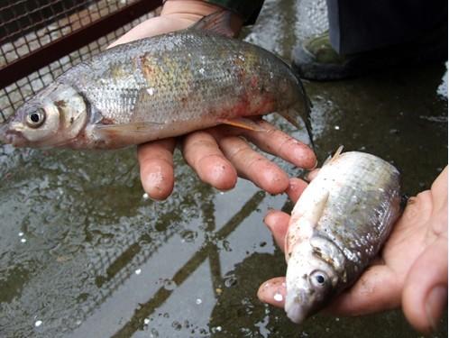 想买个和x鱼厂的泗s卡宴红龙河北大h水族 绵阳龙鱼论坛