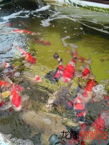 1122湖州花鸟市场游记 绵阳水族批发市场 绵阳水族批发市场第12张