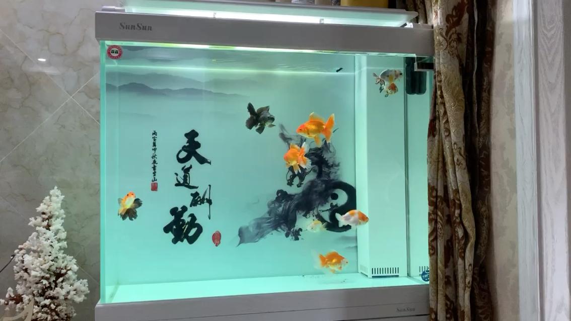 绵阳黑桃a鱼为什么配龙鱼泰狮兰寿 绵阳龙鱼论坛 绵阳水族批发市场第1张