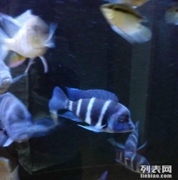 自己制作个鱼缸灯 绵阳龙鱼论坛